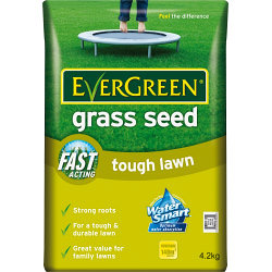 EverGreen Grass Seed