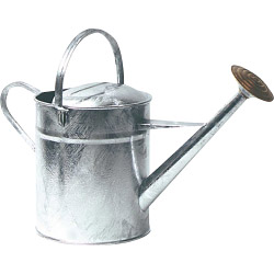 Parasene Galvanised Watering Can & Rose