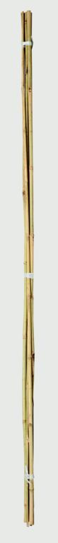 Ambassador Bamboo Canes - 4' Pack 20
