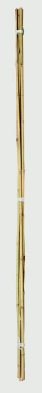 Ambassador Bamboo Canes - 2' Pack of 20