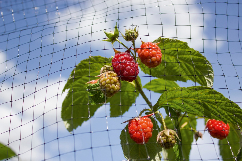 Ambassador Fruit Cage Net - 16 x 2m