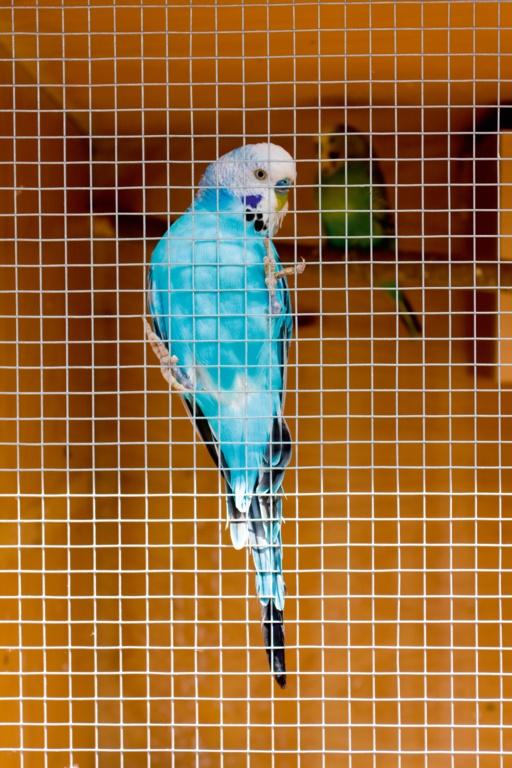 Ambassador Cage & Aviary Welded Panel - 0.6x0.9m