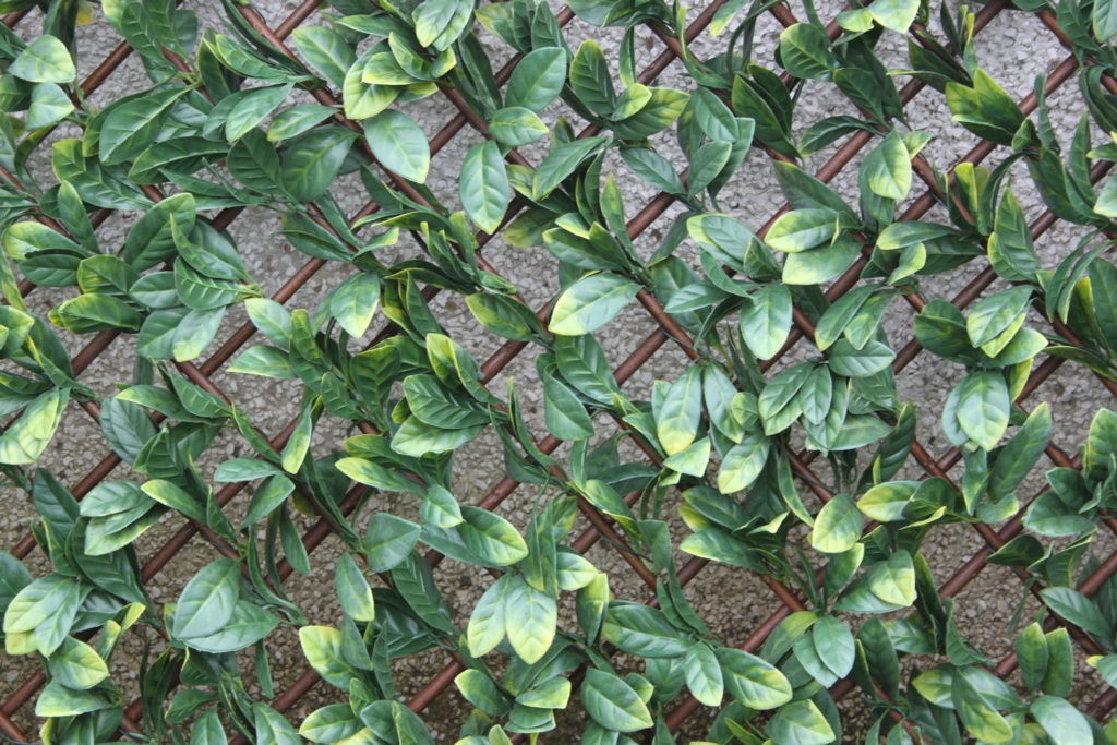 Wonderwal Trellis 100 x 200cm - Laurel Leaf