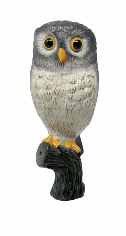 Defenders Little Owl