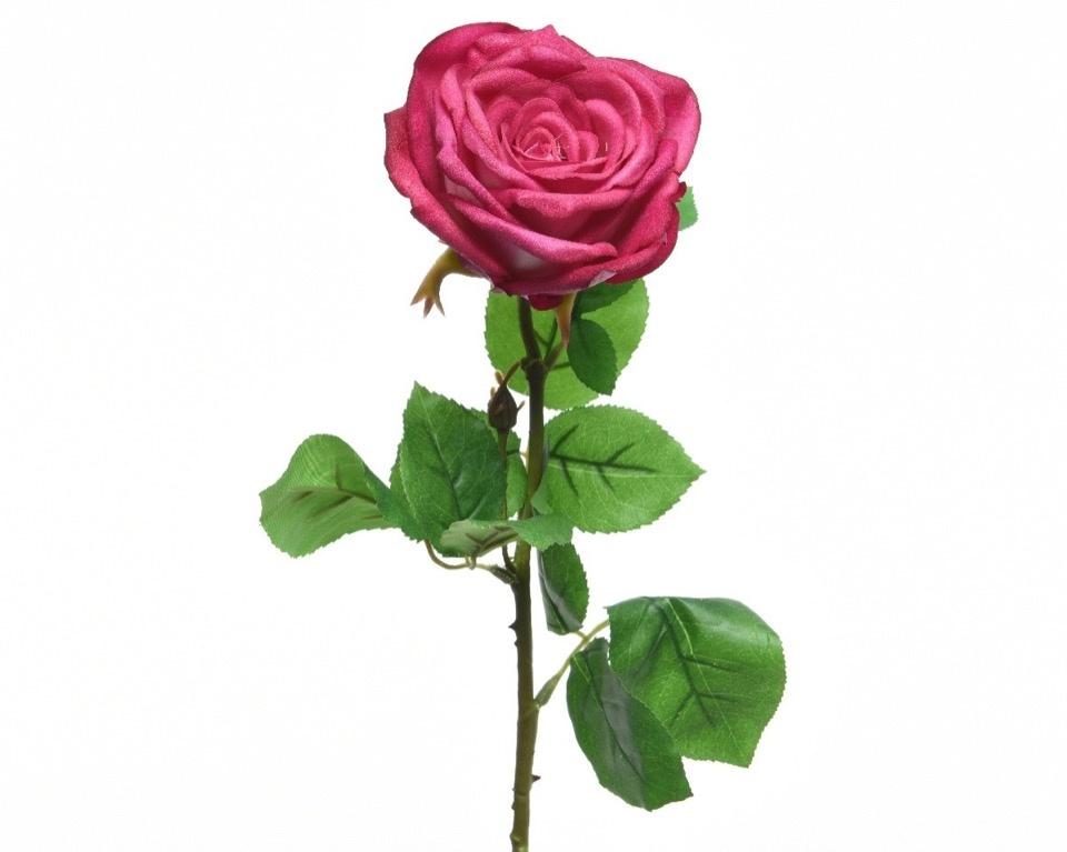 Kaemingk Silk Rose Open On Stem - 68cm Fuchsia