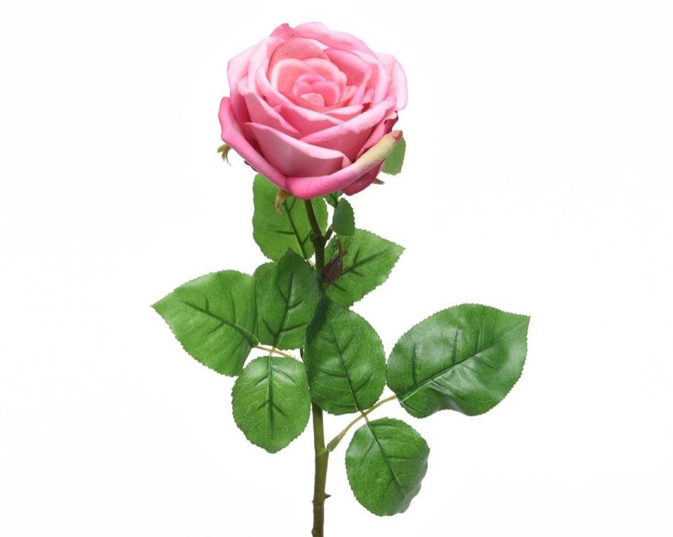 Kaemingk Silk Rose Open On Stem - 68cm Soft Pink