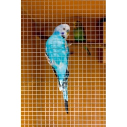 SupaGarden Cage and Aviary Welded Panel 6x6mm 6x0.9m