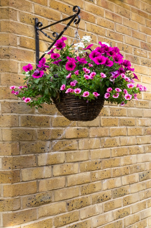 Ambassador Willow Hanging Basket - 12""
